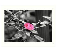 Flower :: Colorized Art Print