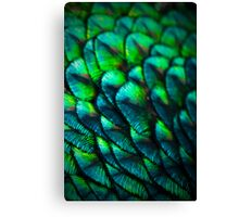 PEACOCK SCALES Canvas Print