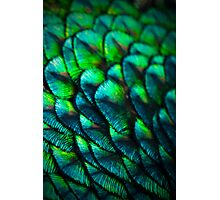 PEACOCK SCALES Photographic Print
