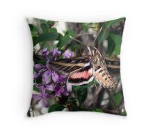 Humming Bird Moth Throw Pillow
