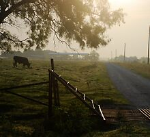 Cattle Guard Sunrise by TJ Zook