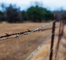 Rusty Barbed Wire Fence by James Gray
