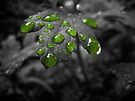 Drops of Green 2 by lindsycarranza