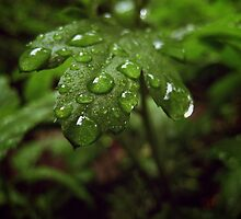 Drops of Green by lindsycarranza