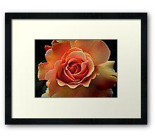 Rose Pêche Framed Print
