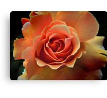 Rose Pêche Canvas Print