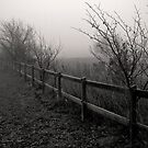 The long Fence by Kofoed