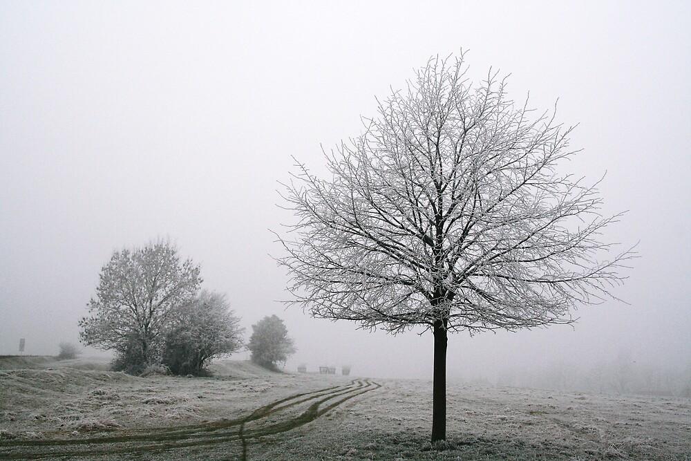 Frozen by Jeff  Wilson