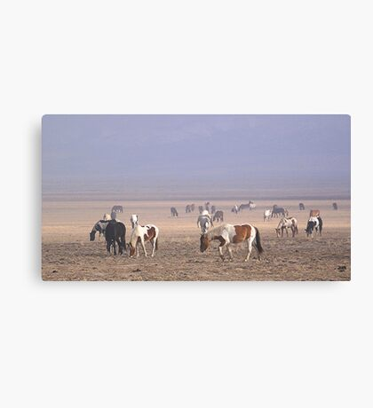 rodeo stock Canvas Print
