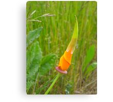 It's Orange Poppy Season #2 Canvas Print