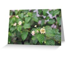 wild flower Greeting Card