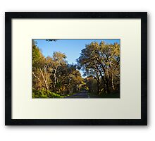 Live Oaks on the Bear Valley Road, Point Reyes, CA Framed Print
