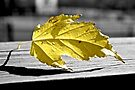 A Yellow Leaf by lindsycarranza