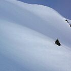 Lone tree on the untracked snow by Istvan Hernadi