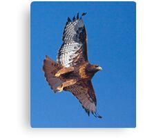 Dark Morph Red-Tailed Hawk Canvas Print