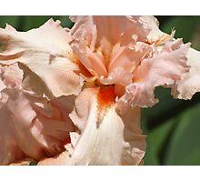 Peach Explosion Photographic Print