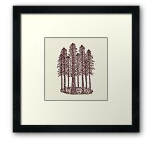Cathedral Grove (Coastal Redwoods) Framed Print