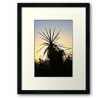 Cactus with Sun Halo Framed Print