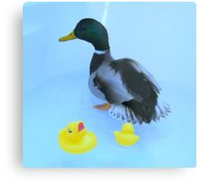 ducky and his rubber ducky Metal Print