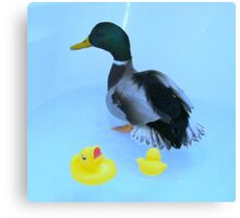 ducky and his rubber ducky Canvas Print