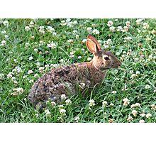 Backyard buddy...I mean bunny! Photographic Print