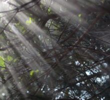 Sunrays in a forest Sticker