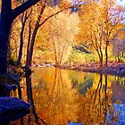 Reflecting Pond by Chelsea Brewer