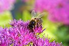 Bee Colourful by missmoneypenny