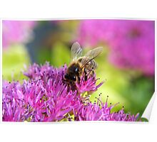 Bee Colourful Poster