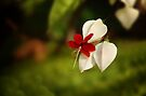 A single bloom by Vikram Franklin