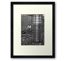 I See You: BLACK-CAP TITMOUSE aka Chickadee in Monochrome Framed Print