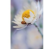 Ladybird and Daisy Photographic Print