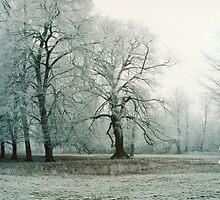Winter's Tale by Angela Ward-Brown