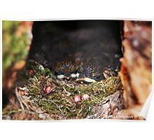 Baby Robins Poster