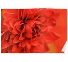 Fabulous Flower Poster