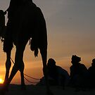 Camel at Sunset in the Sahara desert by rlnorton