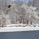 I. R. Eagle by martinilogic