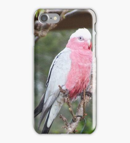 Australian Galah Toowoomba Qld  iPhone Case/Skin