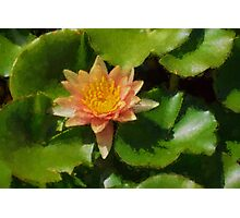 Warm Yellows, Oranges and Corals - a Waterlily Impression Photographic Print