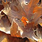 Oak Leaves by Elizabeth McCoy