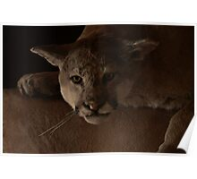 Magnificent Exciting Dangerous - The Mountain Lion Poster