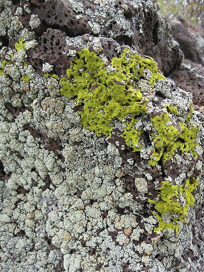 Mossy rock by Elizabeth McCoy