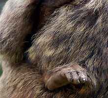 Baboon Clutch by ApeArt