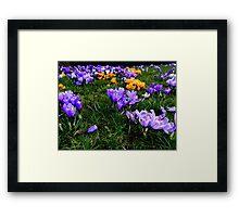 Scotsman Spring Framed Print