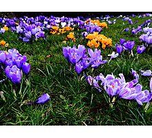 Scotsman Spring Photographic Print