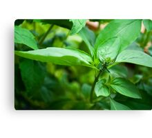 Kitchen Crop Canvas Print