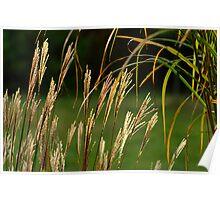 Grasses Poster