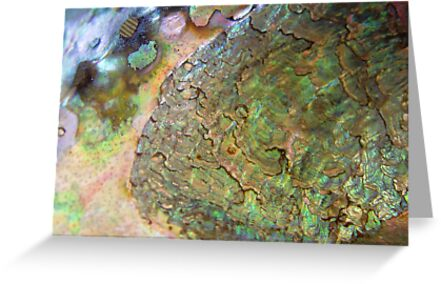 Abalone by May Lattanzio