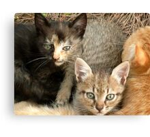 Cwtching Kittens Canvas Print