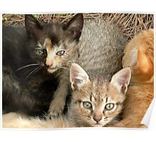 Cwtching Kittens Poster